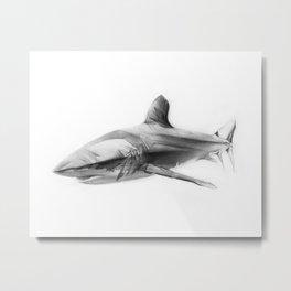 Shark I Metal Print