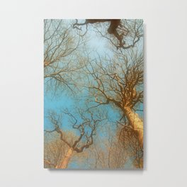 High up in the early  fresh Spring Air Metal Print