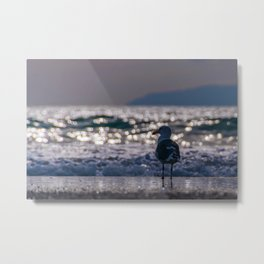 Afternoon Seagull Metal Print