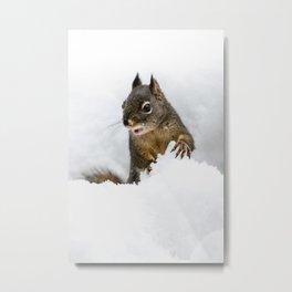 Winter Squirrel III -  Cute Wildlife Animals Nature Photography Metal Print