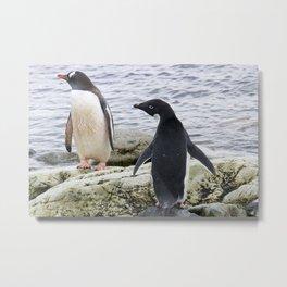 Adelie and Gentoo Penguins Metal Print