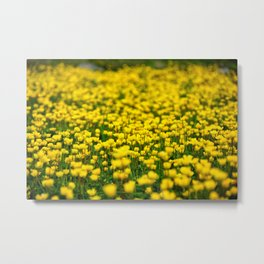 Small yellow wild flowers in the green field Metal Print