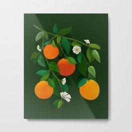 Oranges and Blossoms / Botanical Illustration Metal Print