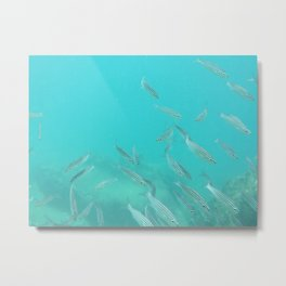 Hello fishies in turquoise water Metal Print