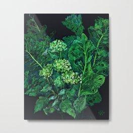 Hydrangea and Horseradish, black and green Metal Print