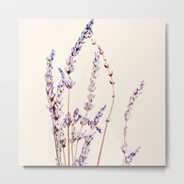 French Lavender Summer Metal Print