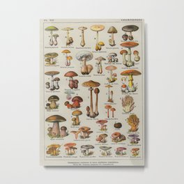 Mushrooms Vintage Scientific Encyclopedia Lithograph French Language Edible & Poisonous Mushrooms Metal Print