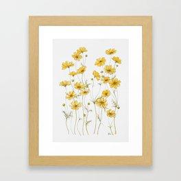 Yellow Cosmos Flowers Gerahmter Kunstdruck