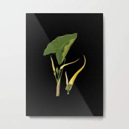 Arum Esculentum Mary Delany Delicate Paper Flower Collage Black Background Floral Botanical Metal Print