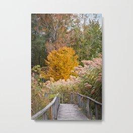 Exploring Autumn Metal Print