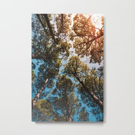Trees and sky in sunlight- forest landscape - nature photography Metal Print