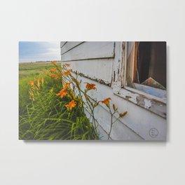 Farmhouse Lilies, North Dakota 3 Metal Print