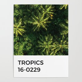 Tropics Palm Tree Green Pantone Chip Poster