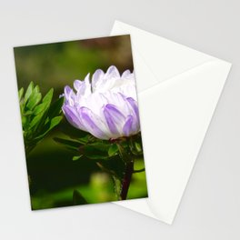 aster in the morning with water drops Stationery Cards