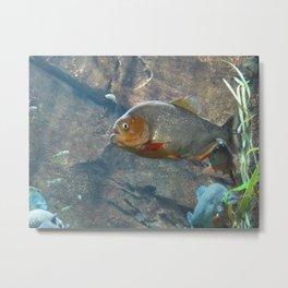 Fish 3 Metal Print