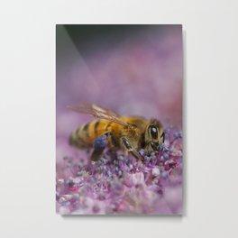 Bee on purple blossom Metal Print