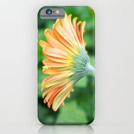 Orange Gerbera Daisy iPhone Case