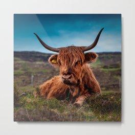 Scottish Highland longhorns Rancher Metal Print