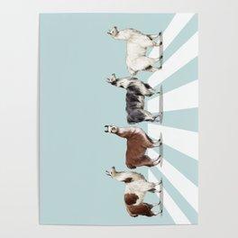 Llama The Abbey Road #1 Poster