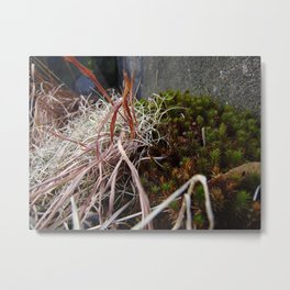 Dry Grass, Moss, and Rock Metal Print