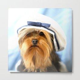 Little Sailor Yorkshireterrier With Sailor Hat  Metal Print