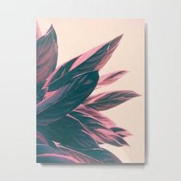 Pink Kalathea Metal Print