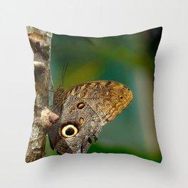 Butterfly eye of owl (Caligo eurilochus) Throw Pillow