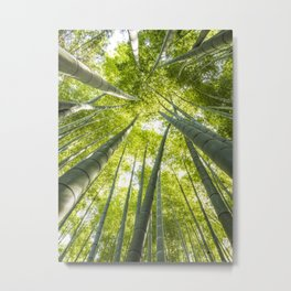 Bamboo forest in Japan Metal Print