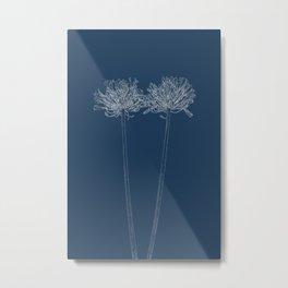 Agapanthus Blueprint Metal Print