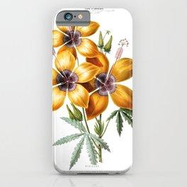Hibiscus Vintage Botanical Flore D' Amerique iPhone Case