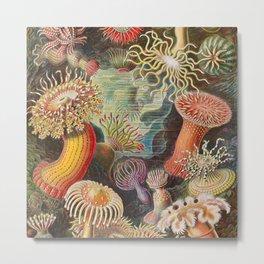 Ernst Haeckel Sea Anemones Vintage Illustration Metal Print