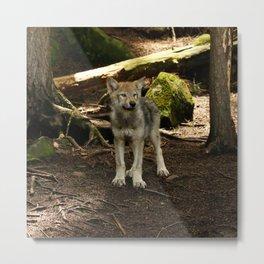 Timber Wolf Pup Metal Print
