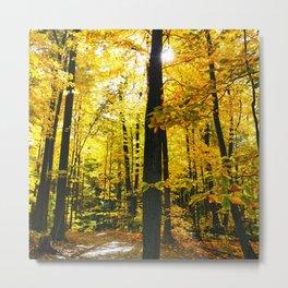 Sun Through Autumn Leaves Metal Print
