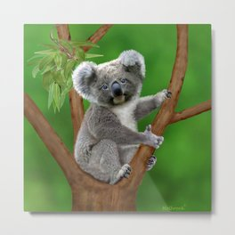 Blue-eyed Baby Koala Bear Metal Print
