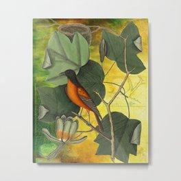 Baltimore Oriole on Tulip Tree, Vintage Natural History and Botanical Metal Print
