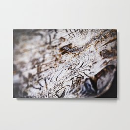 White Birch Wood Bark Natural TexturePattern Metal Print