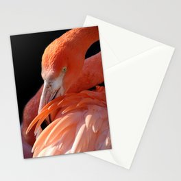 Cuban Flamingo Grooming Stationery Cards