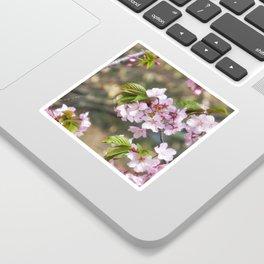 cherry blossom 01 Sticker