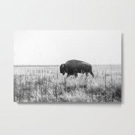 Bison strut Metal Print