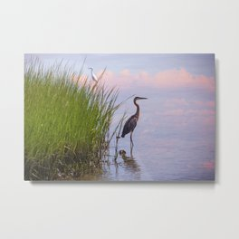 Blue Heron In Assateague Metal Print