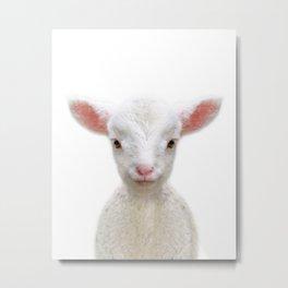 Baby Sheep Metal Print