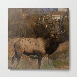 Loveland Elk Metal Print