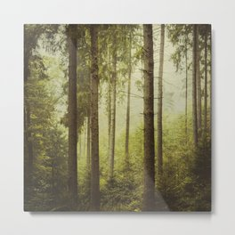 Fir Forest in Fog Metal Print