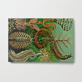 Chaetopoda Metal Print