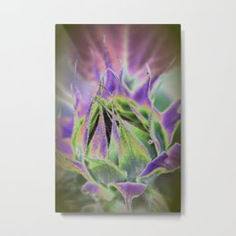 Sunflower Bud Abstract Metal Print