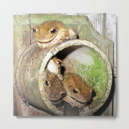 Watercolor Frog, Cuban Tree Frogs 01, St John, USVI, Where's the Party Metal Print