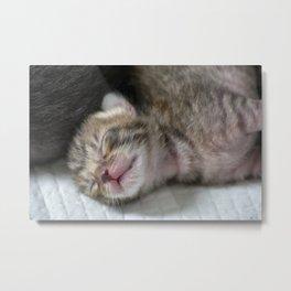 Cute newborn kittens Metal Print
