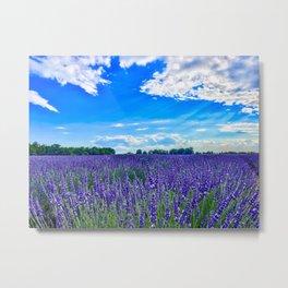 Wildflowers Blooming in a Meadow   Purple Lavender Perennials Deep Blue Sky Spring Landscape France Metal Print