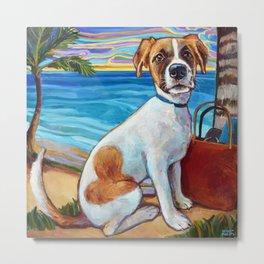 Beach Dog in Aruba Metal Print