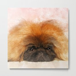 Portrait of fluffy sad Pekingese puppy Metal Print